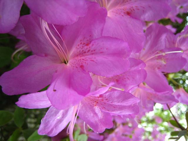 Spring Flowers by Jen Consalvo