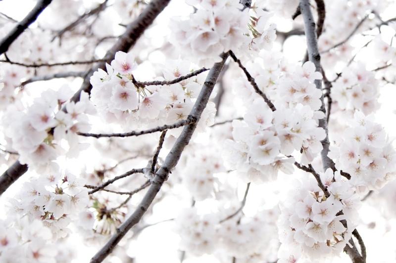 blooms by Jen Consalvo