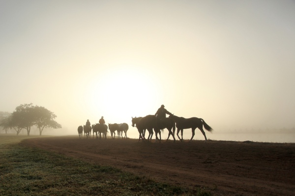 Horses at sunrise in Texas by Jen Consalvo