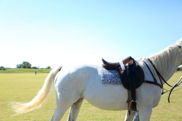 whitehorse by Jen Consalvo